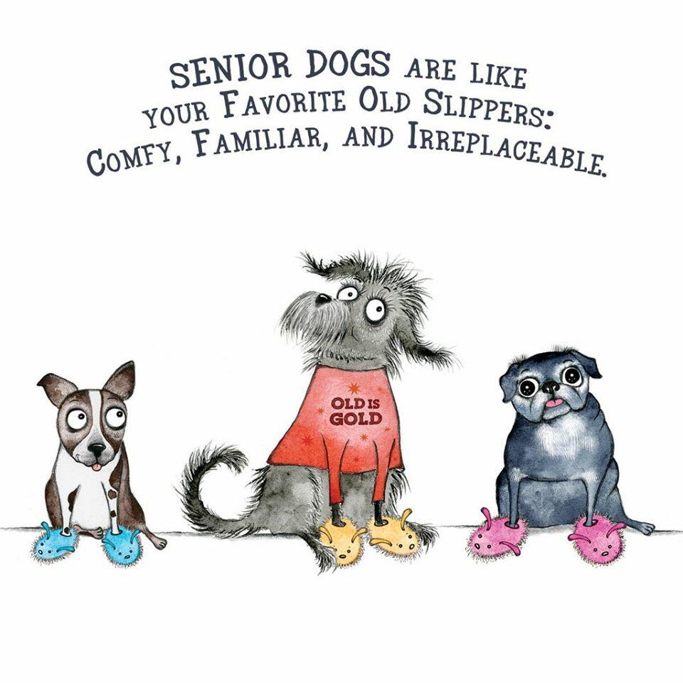 Senior Dog - Donation Print