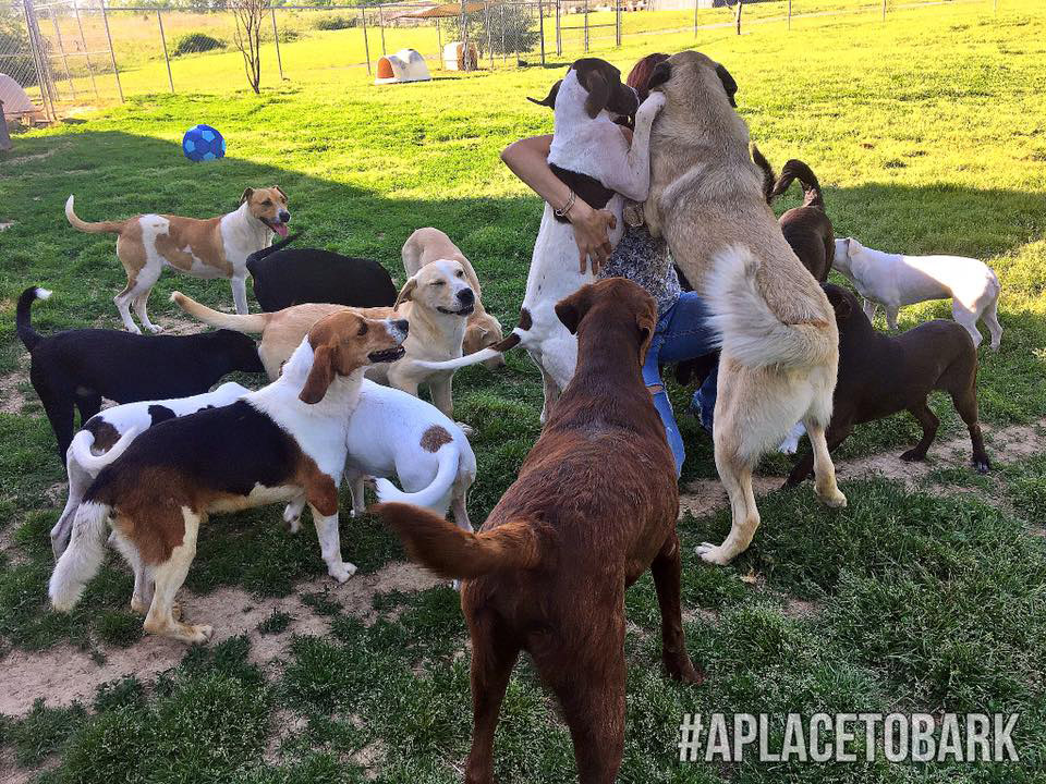 Happy Rescued Dogs - A Place to Bark